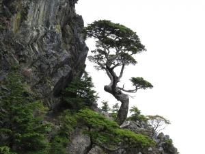 雪山山脈初體驗~武陵四秀之池有品田