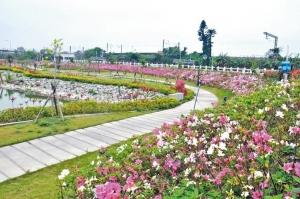 【新聞】後龍高鐵特區 百公尺杜鵑花海