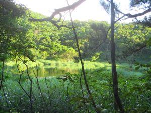 豪大梅雨後寧靜向天池湖沼枝額蟲現蹤跡