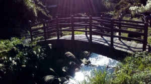 中正山.青楓步道.竹子湖
