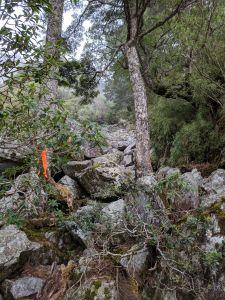 崩潰石瀑之玉山前峰
