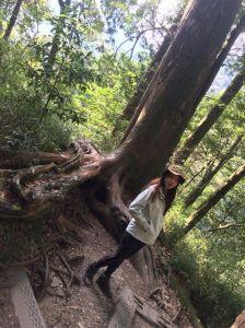 雪山神木步道