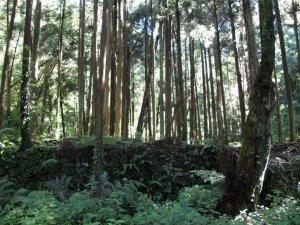 新竹尖石-霞喀羅