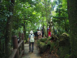 桃園東眼山森林浴20180728