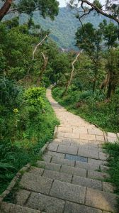 南港山縱走親山步道(拇指山、南港山、象山、九五峰)