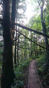 加里山(大坪登山口)-杜鵑嶺