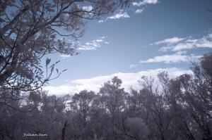 二格山-紅外線攝影