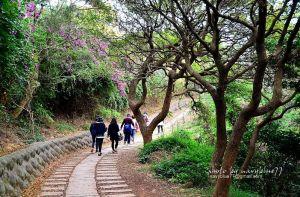 【新竹】登高遠眺看夕陽-鳳崎落日步道+蓮花寺步道