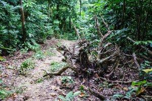 【台南】東山林安森林步道