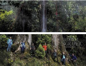 【新聞】《國家地理》雜誌12月號-撞到月亮的樹:臺灣杉三姊妹