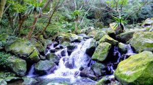 青山瀑布與老梅綠槽