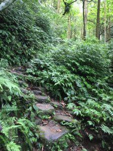 第三登山口-鞍部-二格山,南邦寮