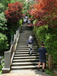 檜木原始林.鐵杉林自然步道
