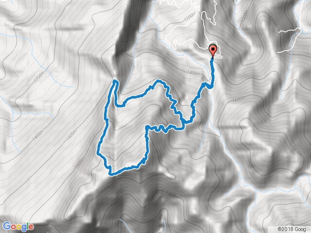鹿場加里山下杜鵑嶺O型