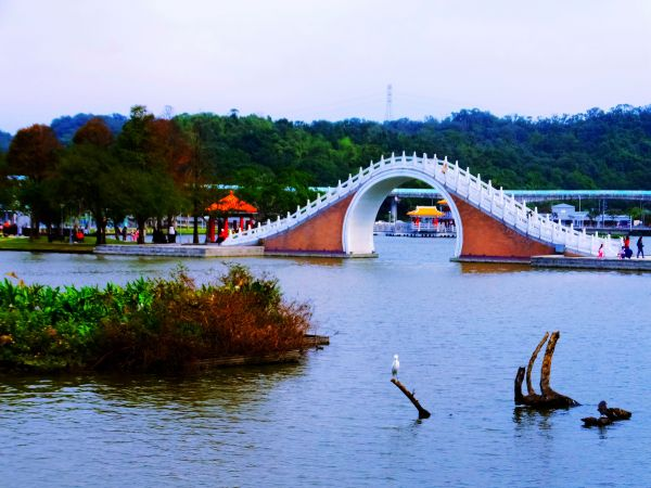 白鷺鷥山與大湖公園落羽松步道