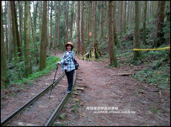 嘉義。特富野古道。鐵道森林最美...