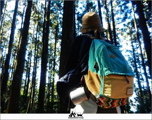 新竹五峰野馬瞰山森林步道