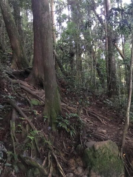 金柑樹留龍頭上 下望優森林