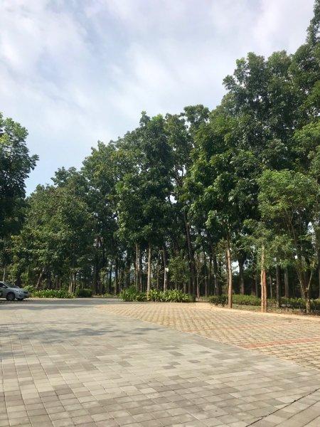 美濃雙溪樹木園-新威森林公園踏...