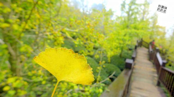武岫農圃銀杏林觀景步道