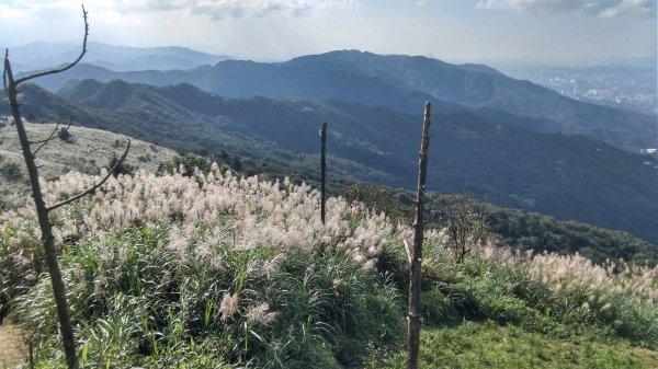 姜子寮山(小百岳011)