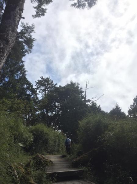 太平山-鐵杉林步道