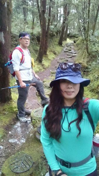 台灣山毛櫸國家步道