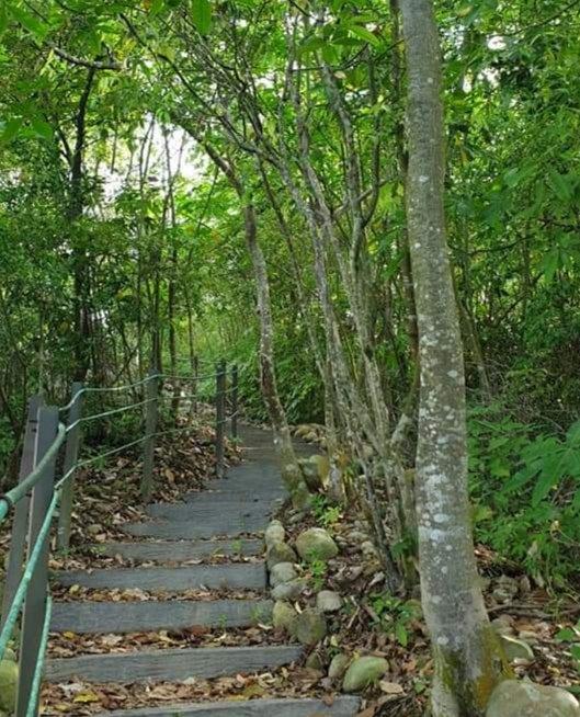 草屯- 九九峰森林步道、美術館美學體驗、多肉植物園