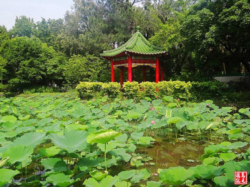 台北植物園步道
