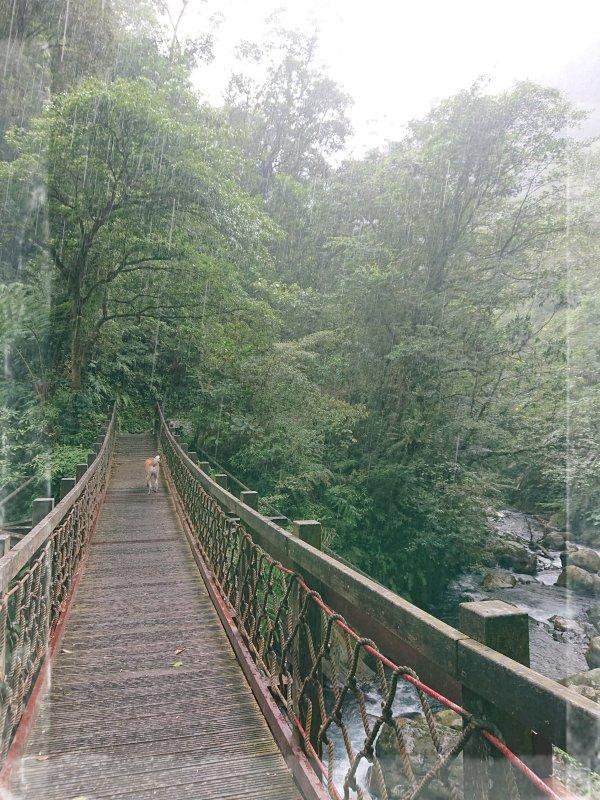 步道巡訪員\九寮溪自然步道8月巡訪小記