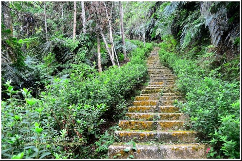 魚池尖登山步道