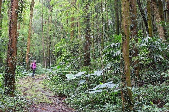 花石溪步道