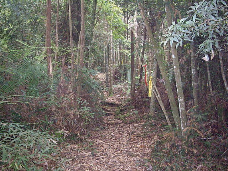 惠蓀林場小出山登山步道