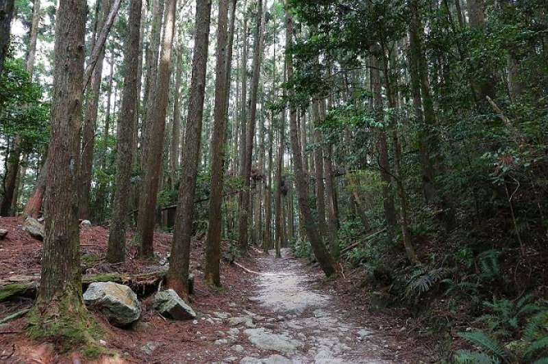 橫嶺山自然步道(木馬古道)