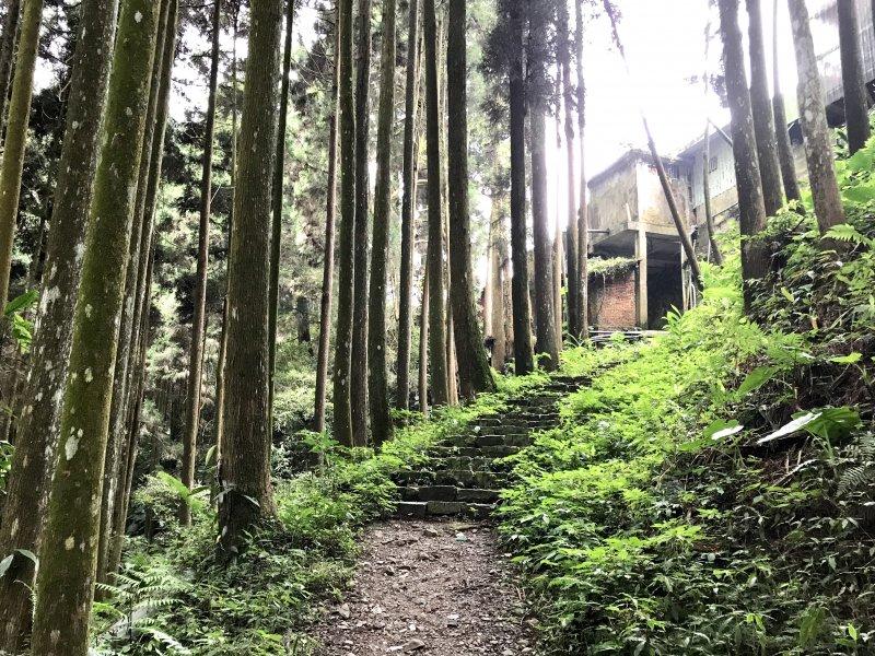 [山系野遊]小而美的來吉古道