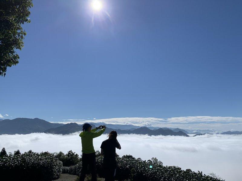 太平~大巃頂茶園